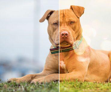 National Mutt Day - Retouching A Dog Portrait With Pixlr X