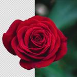 Pixlr X's AI Cutout Tool Automate Your Image Cutouts! - PIXLR Blog